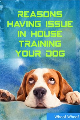 Reasons You're having an issue with House-Training your Dog ! Whoof-Whoof