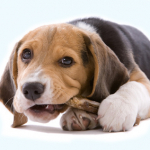 How to deal with your dog's chewing problem